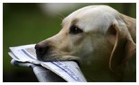 Dog with news